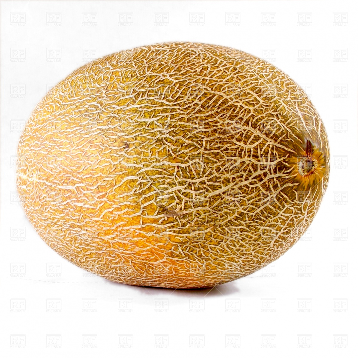 Melon isolated on the white Vector Image #462.