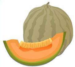 Free Cantaloupe Clipart.