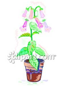Potted_Canterberry_Bells_Flower_Royalty_Free_Clipart_Picture_090226.