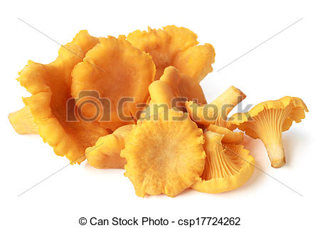 Stock Image of Edible wild mushroom chanterelle (Cantharellus.
