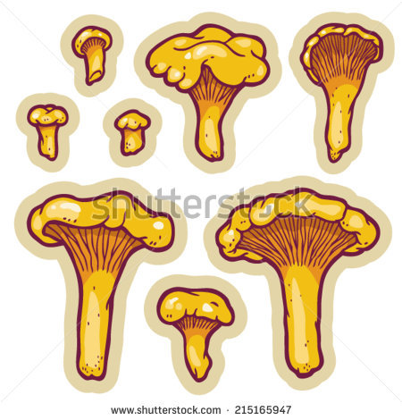 Hand Drawn Edible Chanterelle Mushrooms (Cantharellus Cibarius.