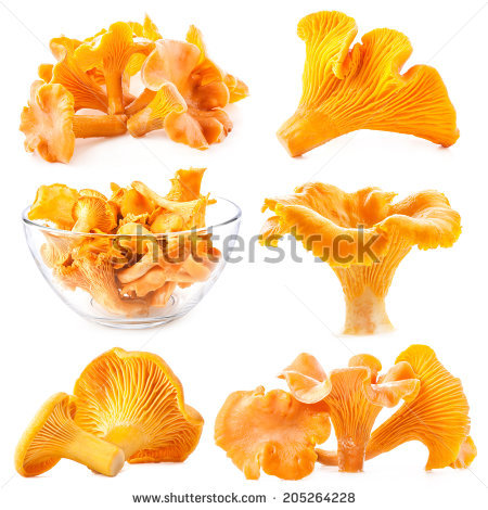 Fungiform Stock Photos, Royalty.
