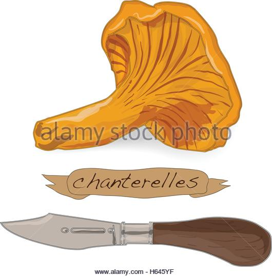 Cantharellus Cibarius Mushrooms Forest Stock Vector Images.