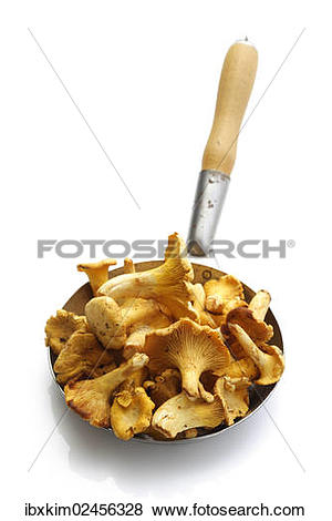 Pictures of Golden Chanterelles or Girolles (Cantharellus cibarius.