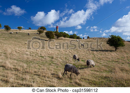 Stock Photography of On pasture at Cape Arcona, Ruegen Island.