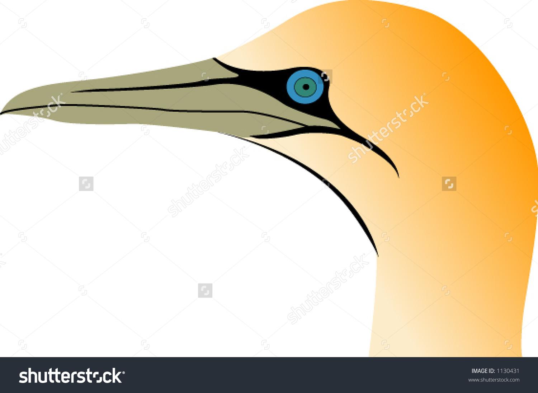 Cape Gannet Stock Vector Illustration 1130431 : Shutterstock.