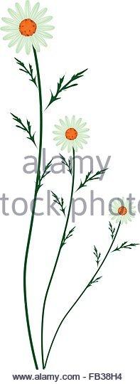 Daisy Clip Art Stock Photos & Daisy Clip Art Stock Images.