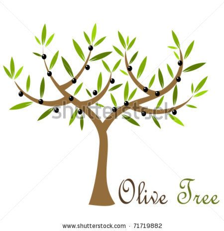 1000+ ideas about Black Olive Tree on Pinterest.
