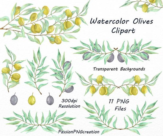 Watercolor Olives Clipart, PNG, Olive branch, Olive tree clip art.
