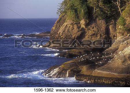 Stock Photo of Rock formations on the coast, Cape Flattery, Makah.