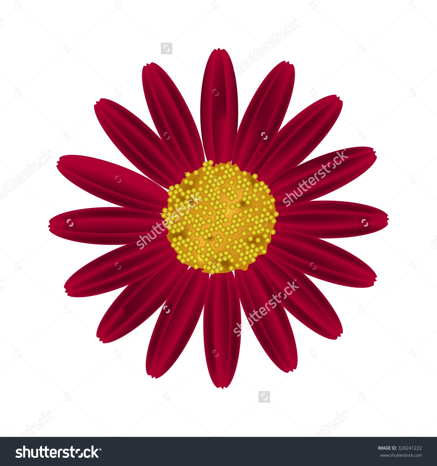 Symbol Of Love, Bright And Beautiful Red Osteospermum Daisy Flower.