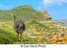Stock Photographs of Cape of Good Hope Natural Reserve.