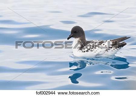 Stock Photo of South Atlantic Ocean, Antarctica, South Shetland.
