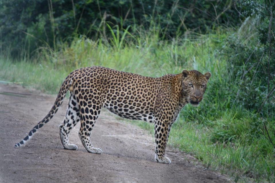 World Heritage Full Day Safari.