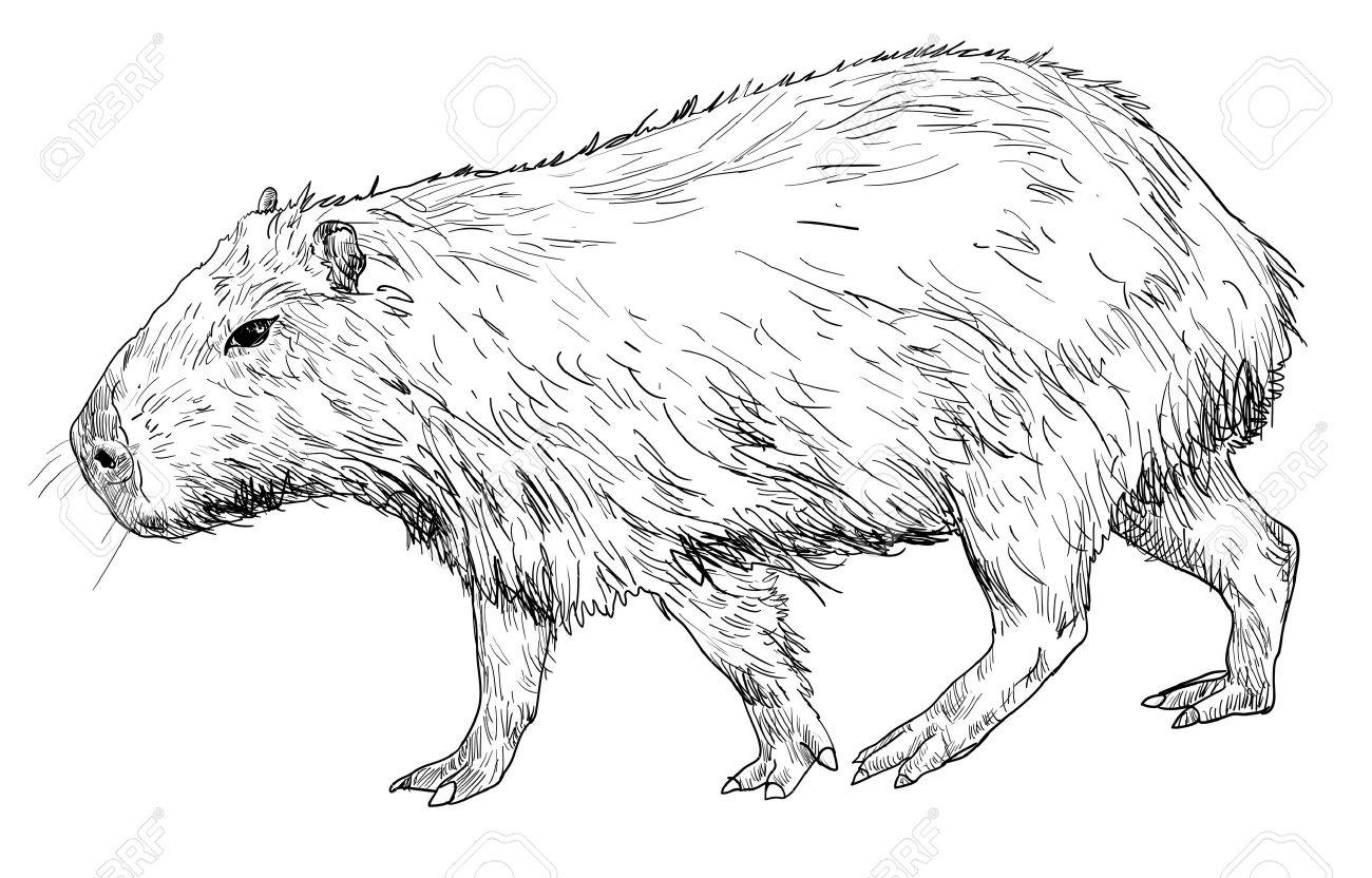 coloring pages capybara as pets - photo#12