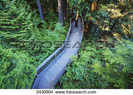 Stock Photo of Trail in the forest at the Capilano Suspension.
