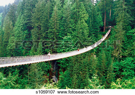 Picture of High angle view of Capilano Suspension Bridge and trees.