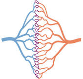 Stock Illustration of Capillaries ccp01006.
