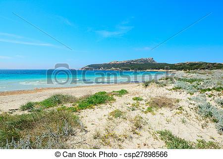 Stock Image of plants and sand in Capo Testa, Sardinia csp27898566.