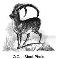 Capra ibex Illustrations and Clipart. 18 Capra ibex royalty free.
