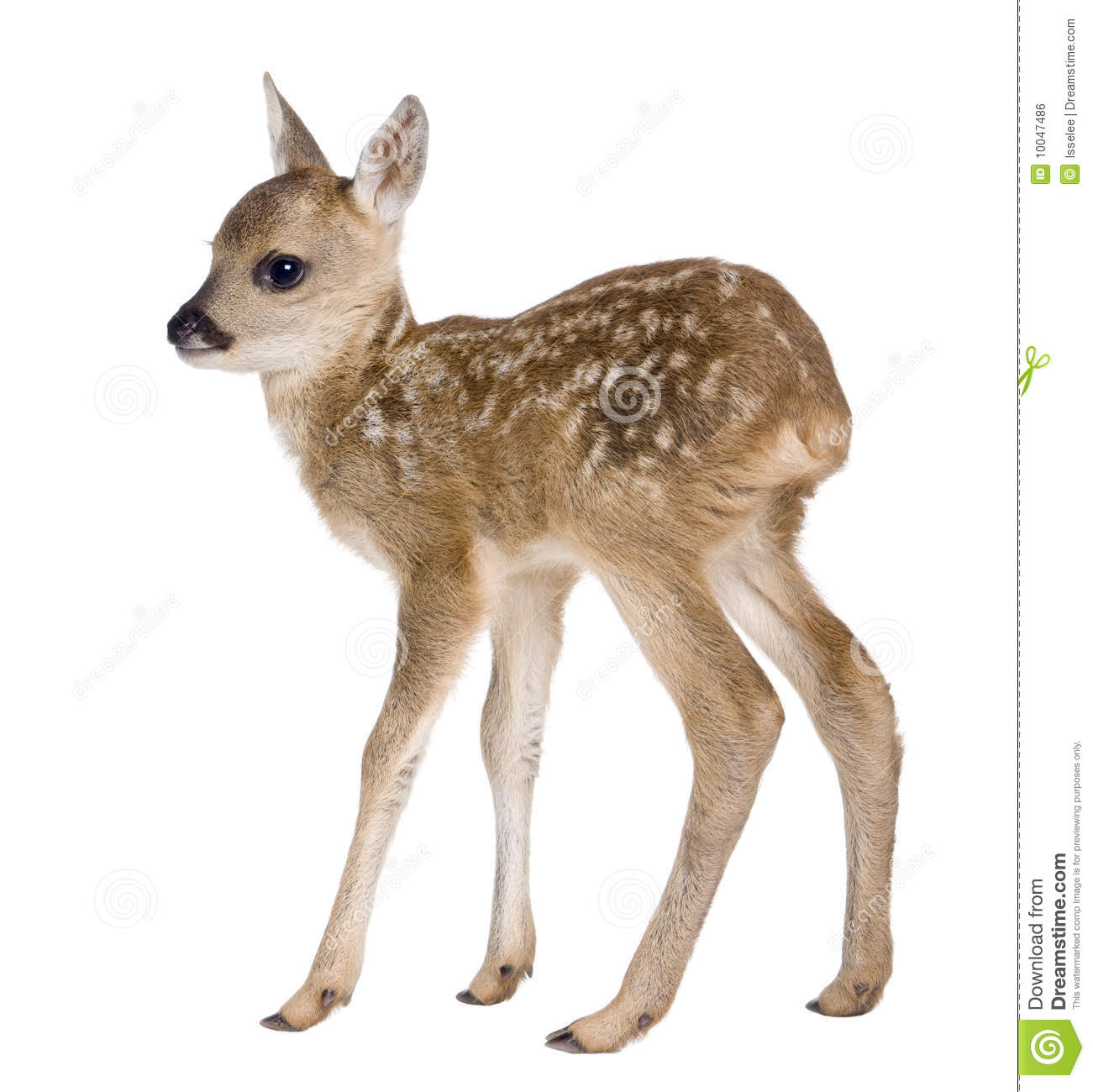 Fawn Clipart.