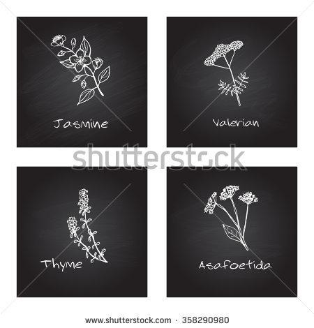 Caprifoliaceae Stock Vectors & Vector Clip Art.