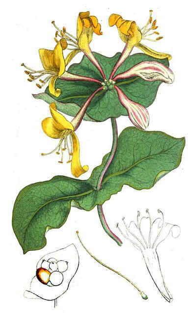 1000+ ideas about Botanical Online on Pinterest.