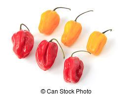 Stock Photo of Habanero Pepper (Capsicum Chinense).