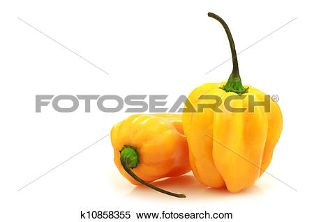 Stock Image of spicy hot peppers(Capsicum chinense k10858355.