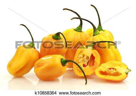 Stock Photo of spicy hot peppers(Capsicum chinense k10858364.