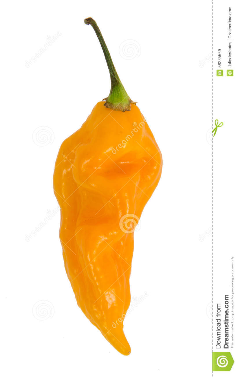 Yellow Fatalii Hot Pepper Stock Photo.
