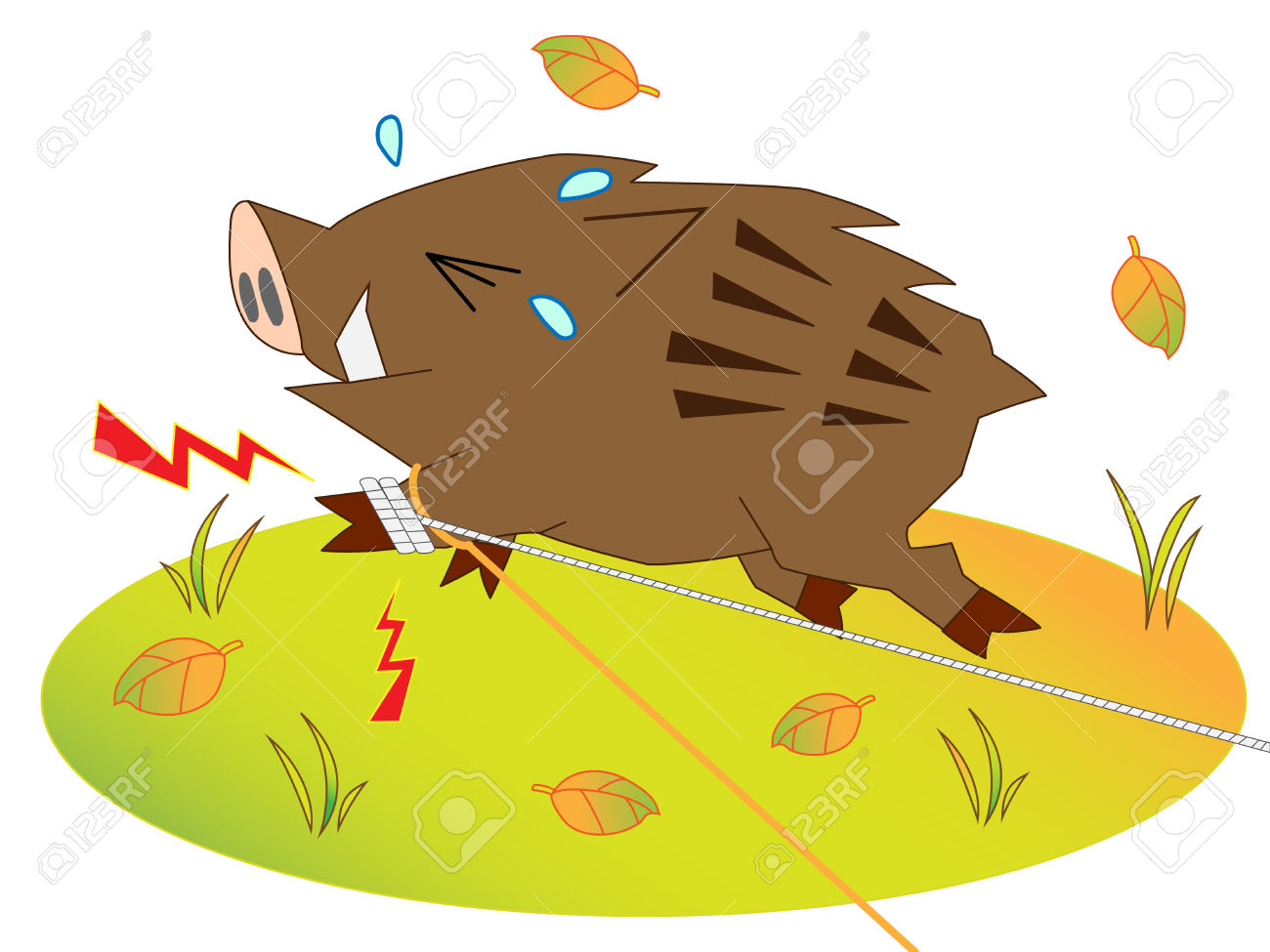 Wild Boar Was Captured Royalty Free Cliparts, Vectors, And Stock.