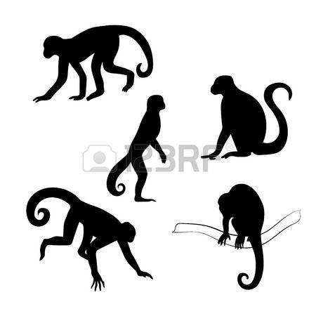 215 Capuchin Stock Vector Illustration And Royalty Free Capuchin.