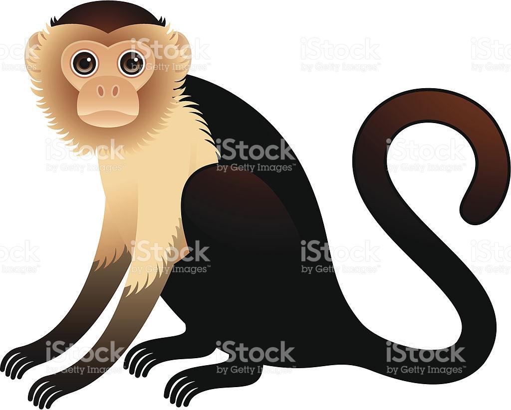 Golden Bellied Capuchin Illustration stock vector art 164474580.