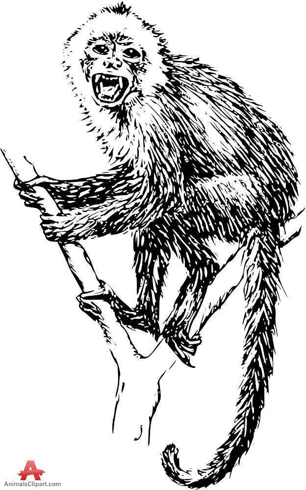 Angry Capuchin Monkey Drawing Clipart.