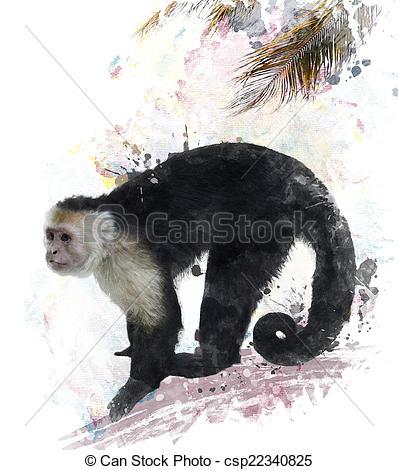 Clip Art of White Throated Capuchin Monkey.