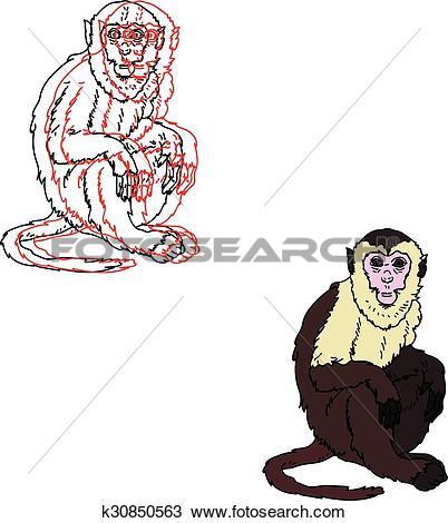 Clipart of Capuchin monkey on a white background k30850563.