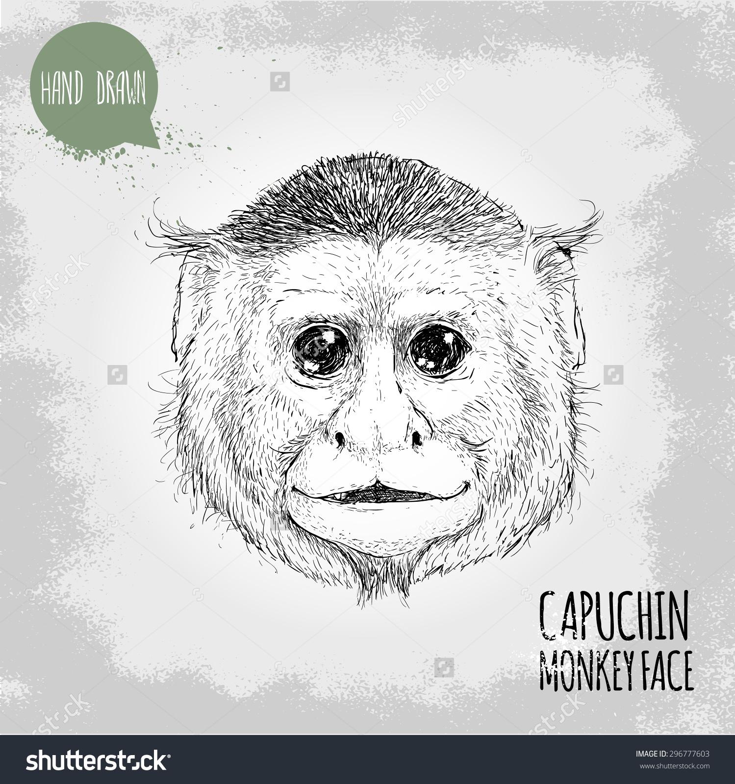 Hand Drawn Sketch Style Illustration Monkey Stock Vector 296777603.
