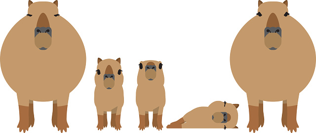 Capybara Clip Art, Vector Images & Illustrations.