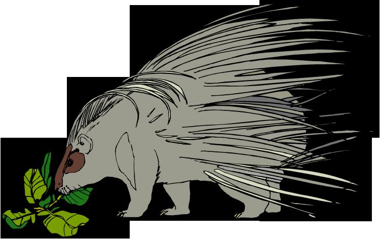 capybara clipart #63.