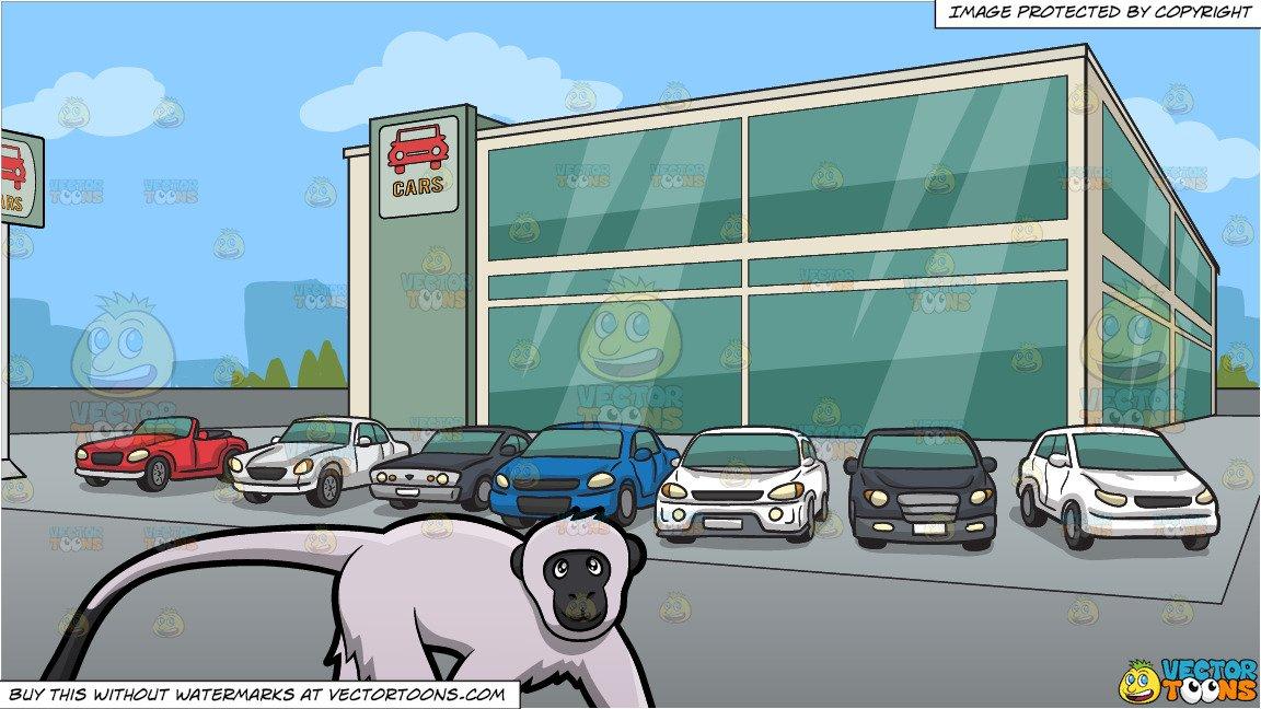 A Vervet Monkey and Outside A Modern Car Dealership Background.