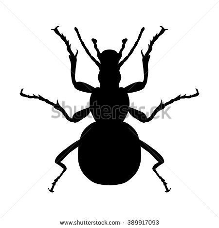 Carabidae Stock Photos, Royalty.