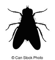 Ground beetle Illustrations and Clipart. 67 Ground beetle royalty.
