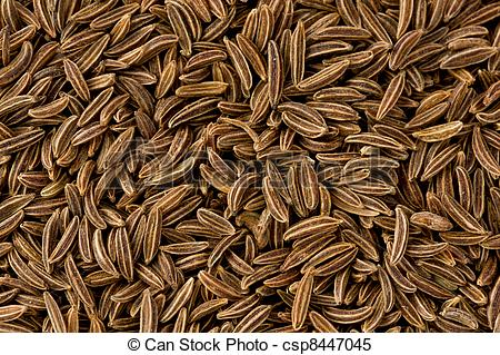 Stock Images of Caraway Seeds (carum carvi).