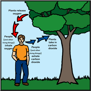 Clip Art: Oxygen/Carbon Dioxide Cycle Color I abcteach.com.