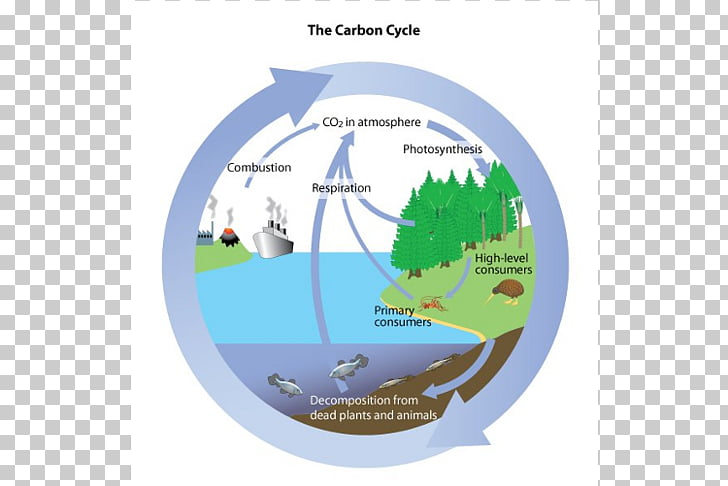Carbon cycle Water cycle Biology Carbon dioxide Oxygen cycle.