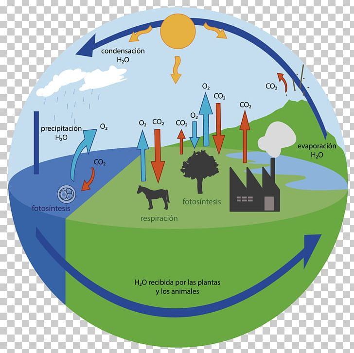 Oxygen Cycle Carbon Cycle Carbon Dioxide Water Cycle PNG.