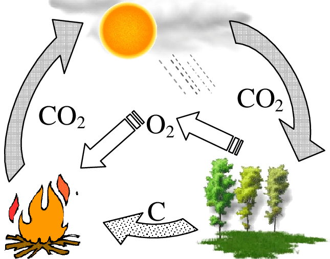Schematic illustration of the carbon cycle..