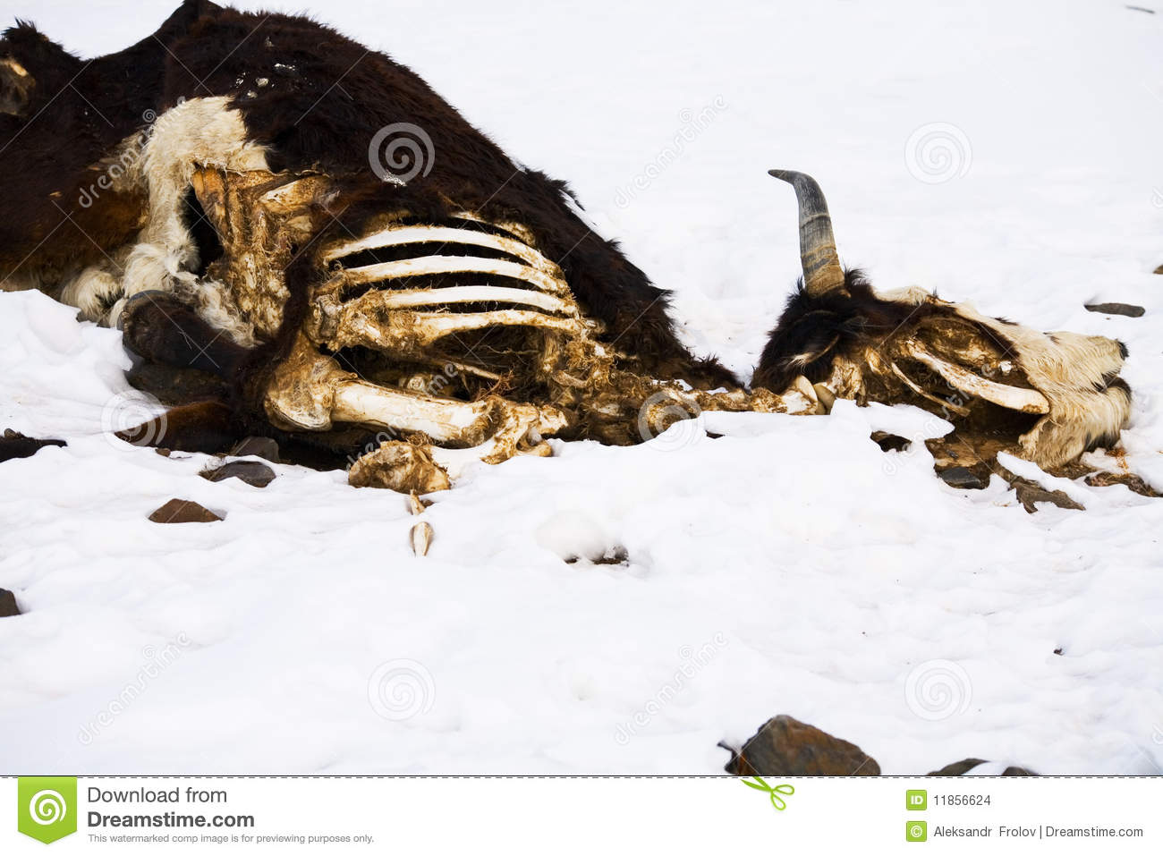 Decomposing animal clipart.