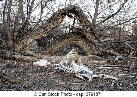 Picture of Dead Cow carcass in nature.